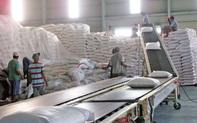 Xuất khẩu gạo – bài toán khó sẽ được giải sau ngày 6/4/2020