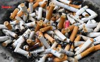Ireland cấm bán thuốc lá hương bạc hà