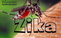 Phát hiện 1 nam thanh niên ở Đà Nẵng mắc virus Zika: Bệnh Zika nguy hiểm ra sao và lây qua những con đường nào?