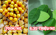 """Những loại cây quả mọc dại ở Việt Nam """"bán không ai mua"""" nhưng sang nước ngoài lại có giá cực đắt, còn được săn lùng đến """"cháy hàng"""""""