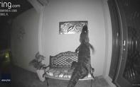 """Cá sấu nửa đêm mò ra trước cửa nhà dân để """"làm thịt"""" bức tranh chú rùa treo trên tường"""