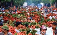 Việt Nam chuẩn bị có sàn TMĐT dành riêng cho vải thiều