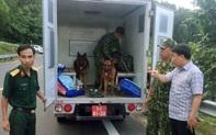 PGĐ Công an Đà Nẵng: 200 cảnh sát đang túc trực tại hiện trường, tiến hành truy đuổi Triệu Quân Sự