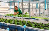 Thật khó tin khi sân thượng chung cư biến thành vườn rau hữu cơ xanh tốt nhờ tình yêu trồng trọt của người đàn ông đảm đang