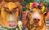 Gặp gỡ chú chó siêu yêu chơi thân với tất cả bươm bướm trong vườn