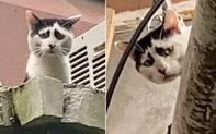 Mèo nổi tiếng vì mặt khổ như sắp bị đuổi việc đến nơi