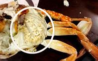 Bóc phốt nhà hàng buffet chế biến bẩn, để hải sản có kí sinh trùng bên trong, ai ngờ chủ thớt lại nhận phản ứng ngược của dân mạng