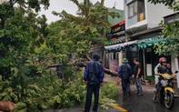 Bão Noul khiến nhiều tuyến đường ở Đà Nẵng bị ngập, cây xanh ngã đổ