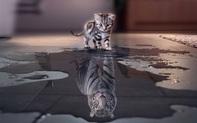 """Quy luật tấm gương: Bản thân xuất chúng hay không, năng lực ở """"tầm"""" nào, chỉ bạn mới là người thấu đáo!"""