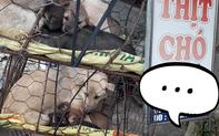 """Hình ảnh khiến MXH Việt """"dậy sóng"""": Chó mẹ cho đàn con bú trước khi bị đưa vào lò mổ"""