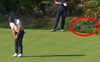 Khoảnh khắc lo lắng: Mải thi đấu, golfer tiến quá sát con cá sấu đang ẩn mình dưới mương nước