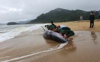 Nỗ lực giải cứu cá voi nặng gần 3 tấn mắc cạn vào bờ