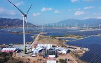 Nhà máy điện gió lớn nhất Việt Nam đi vào hoạt động