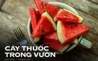 """Vào hè, ăn dưa hấu: Không chỉ ngon mà còn là """"nhà máy"""" chứa nhiều chất dinh dưỡng và làm thuốc chữa bệnh siêu hay"""
