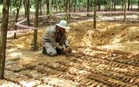 Phát hiện hầm chứa gần 500 vật liệu nổ giữa rừng keo của người dân
