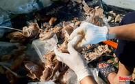 Phát hiện 540kg ma túy giấu trong dạ dày lợn và mô tơ điện có gắn định vị theo dõi