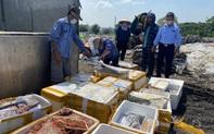 Tiêu hủy gần nửa tấn thực phẩm tươi sống không rõ nguồn gốc xuất xứ