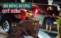 7 cá thể hổ trong vụ 'trốn chạy, lùi xe đâm nát xe cảnh sát': Loài đặc biệt quý hiếm!