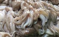 Xuất khẩu hải sản 8 tháng đầu năm 2021 đạt 2,1 tỷ USD