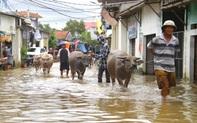 Cận cảnh 'rốn lũ' ở Nghệ An, nơi hơn 3000 hộ dân vẫn đang ngập chìm trong nước 3 ngày qua
