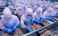 Kinh tế Việt Nam vẫn chưa trở lại quỹ đạo tăng trưởng cao như giai đoạn 1990 – 2006