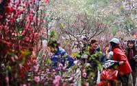 Hà Nội sẽ có 64 chợ hoa xuân phục vụ Tết Nguyên đán Kỷ Hợi