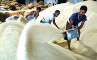 Thương mại gạo thế giới năm 2021: Ấn Độ làm chủ thị trường với 1/2 tổng xuất khẩu gạo toàn cầu