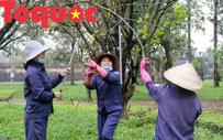 """Công nhân nữ đội rét, đu mình trên cây chăm vườn mai """"khủng"""" trước Kinh thành Huế"""