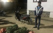 Lào Cai: Bốn thanh niên chung nhau trồng một nương cây thuốc phiện