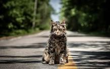 Năm Hợi nhưng bom tấn kinh dị được mong chờ nhất của Paramount lại mang…mèo ra dọa khán giả