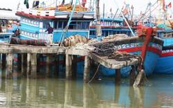 Thủ tướng đồng ý dừng dự án xây dựng tuyến luồng Khu bến cảng Thọ Quang