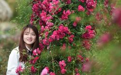 Kỳ công phía sau những vườn hoa đẹp mê hồn lưng chừng trời