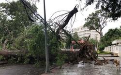 Bão số 9 quét qua Vũng Tàu, cây xanh gãy đổ la liệt