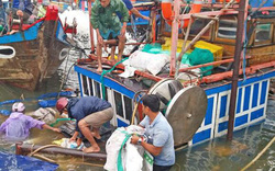 Neo đậu tránh bão, hai tàu cá ở Quảng Nam bị sóng lớn đánh chìm