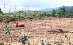 """Ông Trần Bắc Hà đã ủng hộ """"siêu dự án"""" nuôi bò tại Hà Tĩnh 4.500 tỷ thế nào?"""