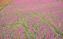 Thỏa sức check in tại thung lũng hoa lớn nhất Việt Nam