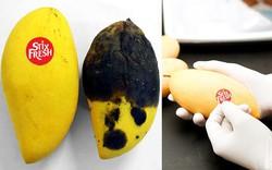 Miếng dán bằng hóa chất, giúp hoa quả tươi ngon trong nửa tháng, không lo thối