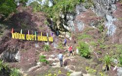 Vườn quýt trong lân đá quý hiếm, có một không hai tại Việt Nam