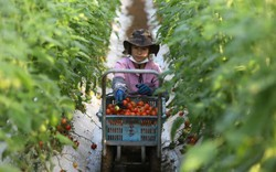 Có công nghiệp robot đứng đầu thế giới, nền nông nghiệp Nhật Bản vẫn