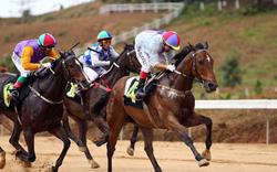 Bổ sung Dự án tổ hợp vui chơi giải trí đa năng - Trường đua ngựa vào Quy hoạch TP Hà Nội