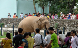 Vườn thú Hà Nội được công nhận là điểm du lịch