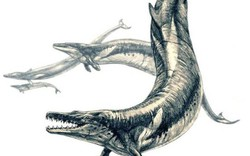 Tìm thấy hóa thạch cá voi khổng lồ thời cổ đại
