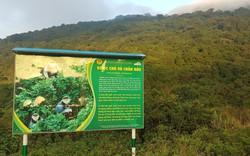 Du khách không nên cho khỉ và các loài động vật hoang dã ăn thức ăn khi tham quan bán đảo Sơn Trà