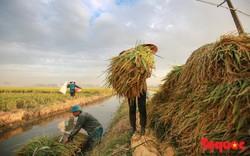 10 thành tựu nổi bật trong lĩnh vực nông nghiệp và phát triển nông thôn năm 2018
