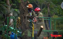 Chặt bỏ cây xanh dọc sông Tô Lịch, mở rộng mặt đường tuyến vành đai 2