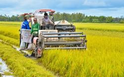 Hơn 100 ha đất trồng lúa của An Giang và Bình Thuận được chuyển đổi sang đất phi nông nghiệp