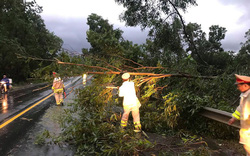 Mưa lớn, nhiều cây xanh ngã đổ ở Đà Nẵng