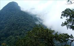 Đà Nẵng công bố diện tích rừng khu bảo tồn Bà Nà – Núi Chúa ngày càng tăng lên