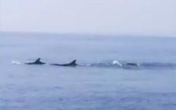Du khách chứng kiến đàn cá heo bơi tung tăng trên vùng biển Cửa Đại