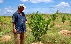 Gia Lai: Hình thành vùng chuyên canh cây ăn quả theo tiêu chuẩn VietGAP